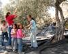 Recogida de la aceituna en Beit Hammed, Cisjordania (2010) |  ©  Carmen Rengel