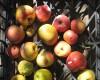 Manzanas en una tienda de Venecia (2009) |   © Alejandro Luque