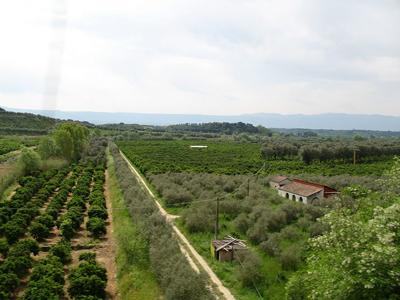 Campos cerca de Rosarno, Calabria (Italia) | GJo (GNU)