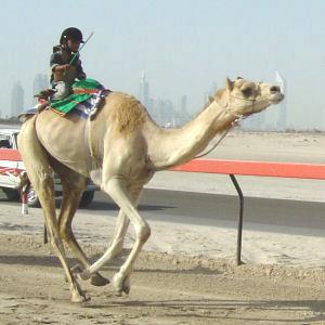 Niño-jinete en un país del Golfo | Ansar Burney Welfare Trust (cortesía)