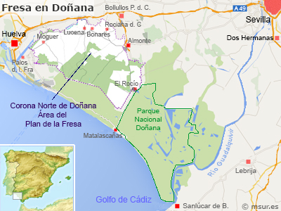 donnana-fresa