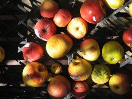 manzanas italia